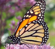 Ефект на пеперудата при форекс